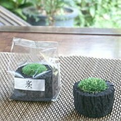 Preserved Moss on Charcoal Bed